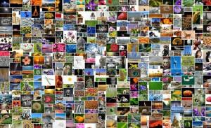 Colección de imágenes online